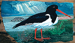 Oyster Catcher by Folke Heybroek
